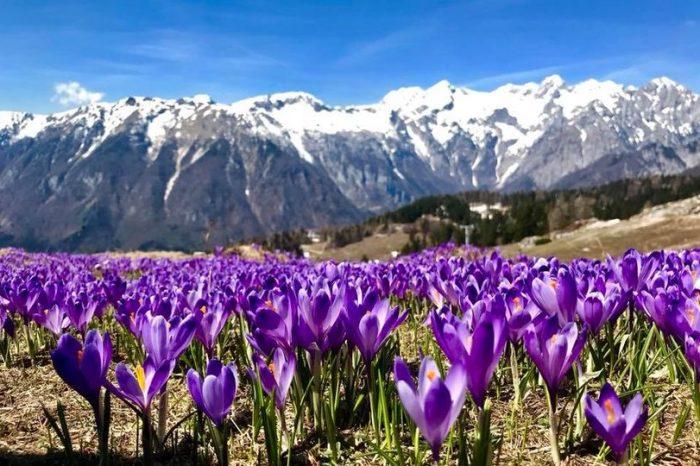 V vijolično odeta Velika planina