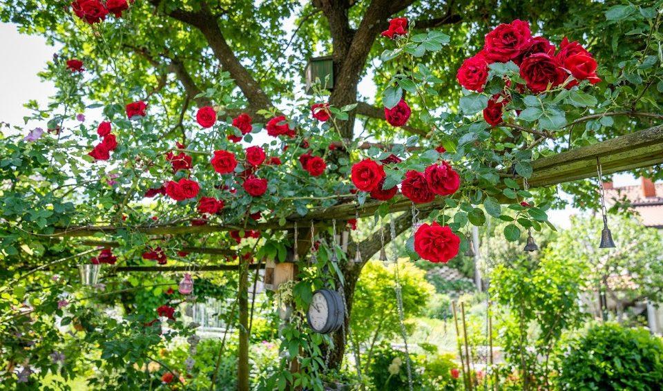 12. junij 2021: Cvetoča Vipavska dolina